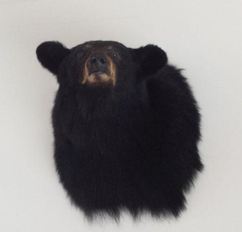 Waleri's bear